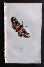 Captain Brown 1834 Antique Hand Col Moth Print. Bright Moth 88 Siberia